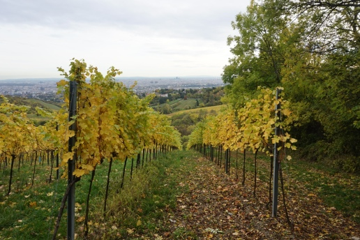 Foliage in the vineyards